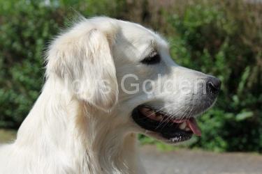 Anika Fine of joys golden Genesis